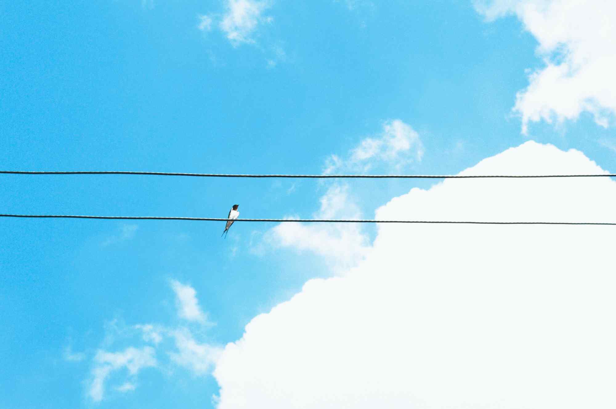 停在电线上的小燕子桌面壁纸