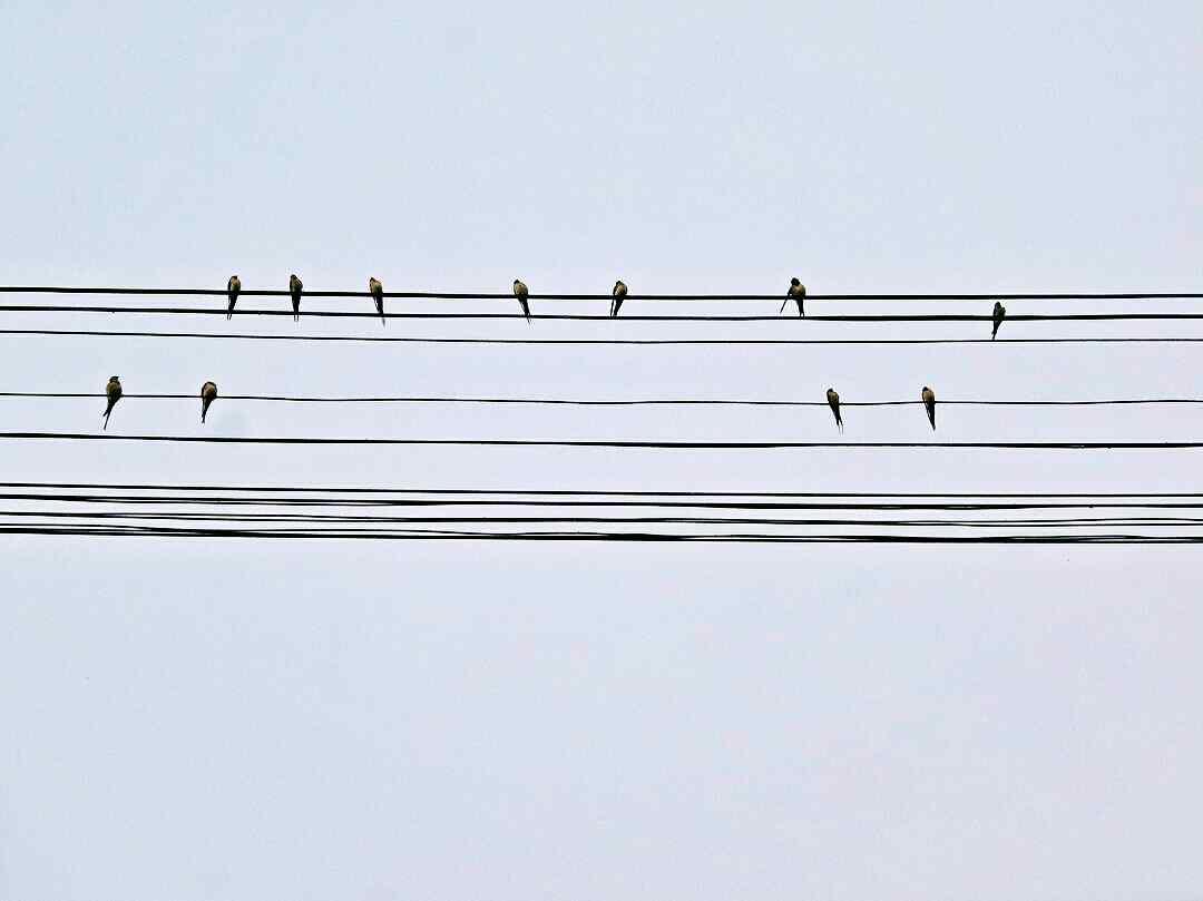 可爱的燕子五线谱桌面壁纸