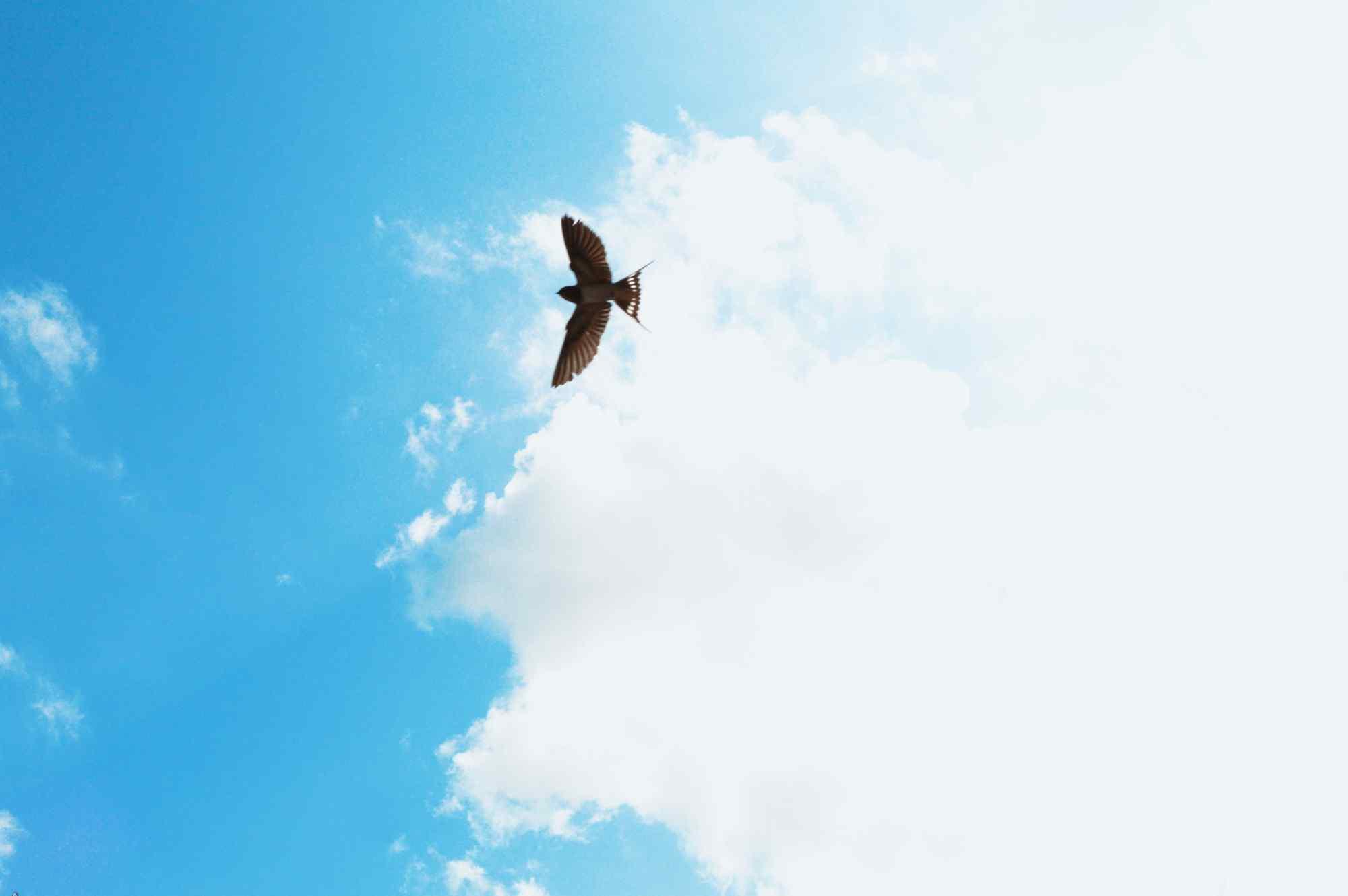 蓝天白云上的燕子桌面壁纸