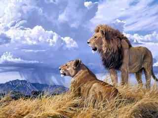 有爱的狮子草原风景桌面壁纸
