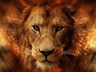 酷炫的高清狮子头桌面壁纸
