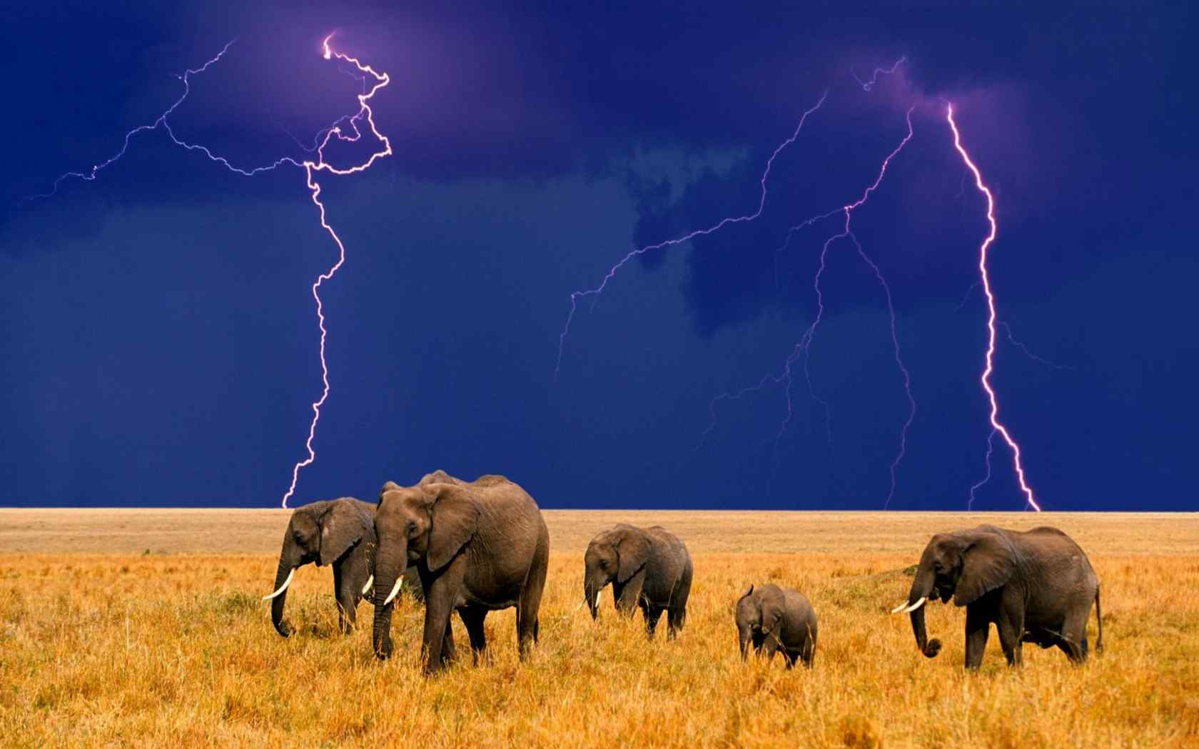 草原上成群结队的大象桌面壁纸