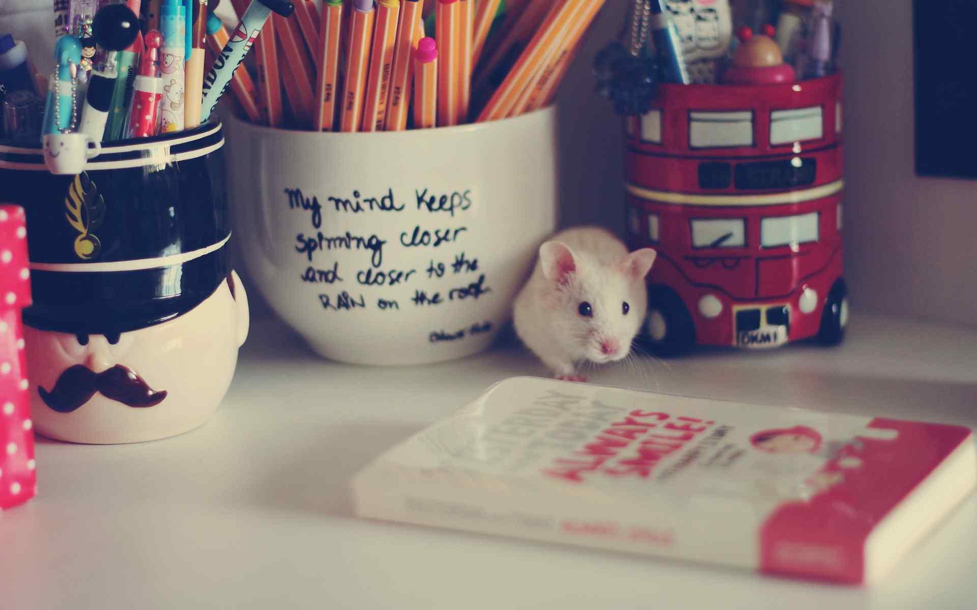 书桌上的可爱小白鼠图片电脑壁纸