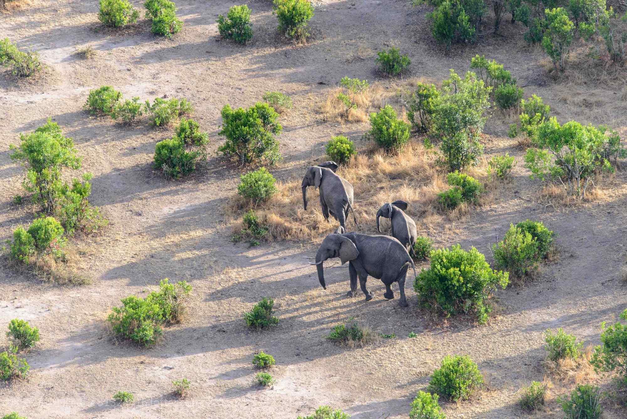 非洲草原上迁徙的大象桌面壁纸