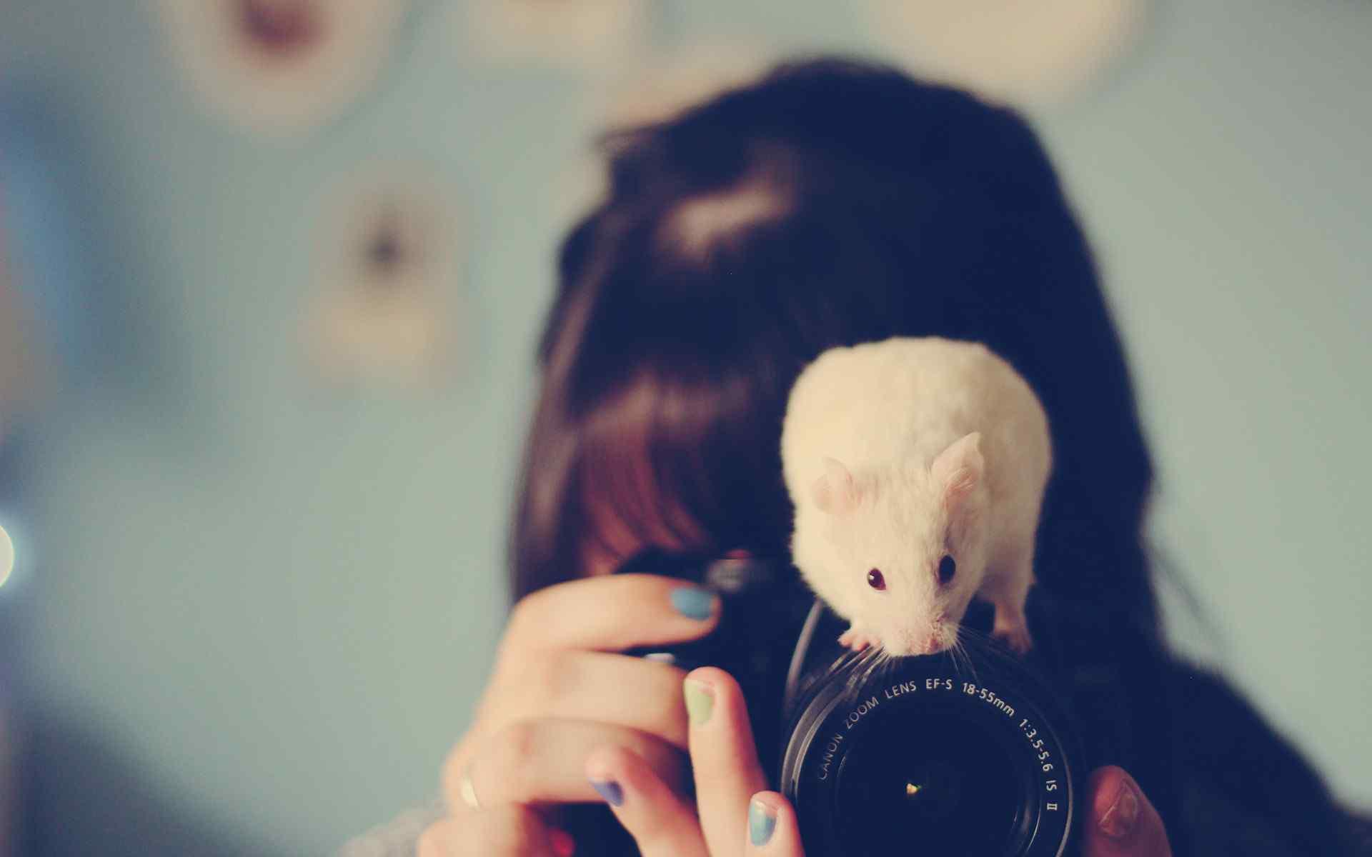 相机上的可爱小白鼠图片桌面壁纸