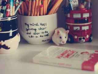 书桌上的可爱小白