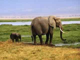 可爱的大象母子桌