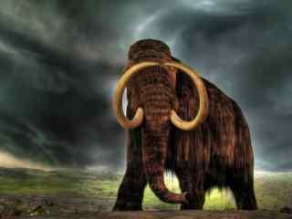 长毛大象桌面壁纸