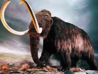 雄壮的长毛大象桌