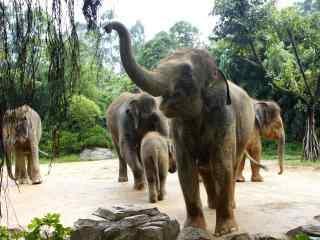 可爱的大象桌面壁