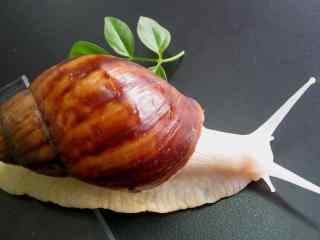 文艺蜗牛摄影图片桌面壁纸