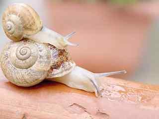 有爱的小蜗牛图片桌面壁纸