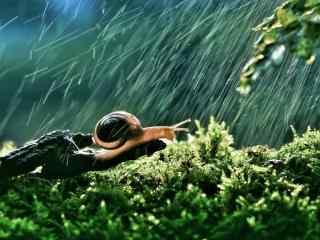 风雨中坚强的小蜗牛图片壁纸