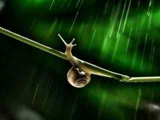 雨中的小蜗牛图片桌面壁纸