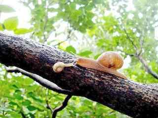 树梢上的可爱小蜗牛桌面壁纸