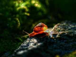 暖色调唯美蜗牛摄影图片壁纸