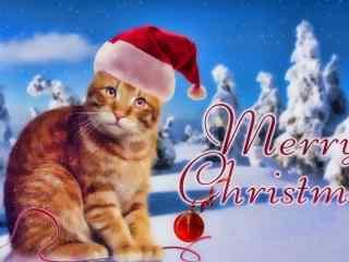 圣诞节可爱猫咪桌面壁纸