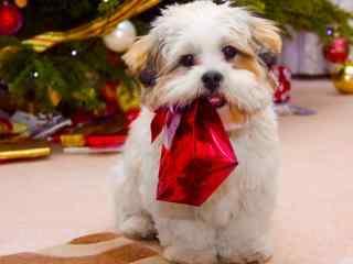 可爱的狗狗过圣诞节桌面壁纸