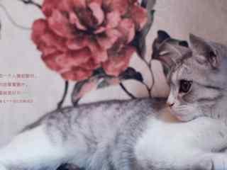 唯美文字可爱猫咪