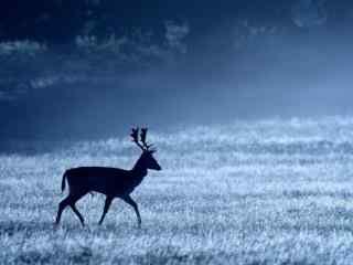 冬日森林中的麋鹿图片桌面壁纸