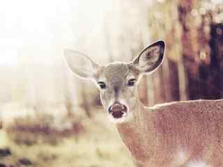 可爱的小麋鹿图片