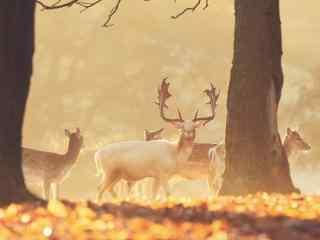 森林中的麋鹿群桌