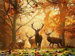 唯美秋天森林中的