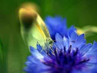 微距绿色小蝴蝶桌