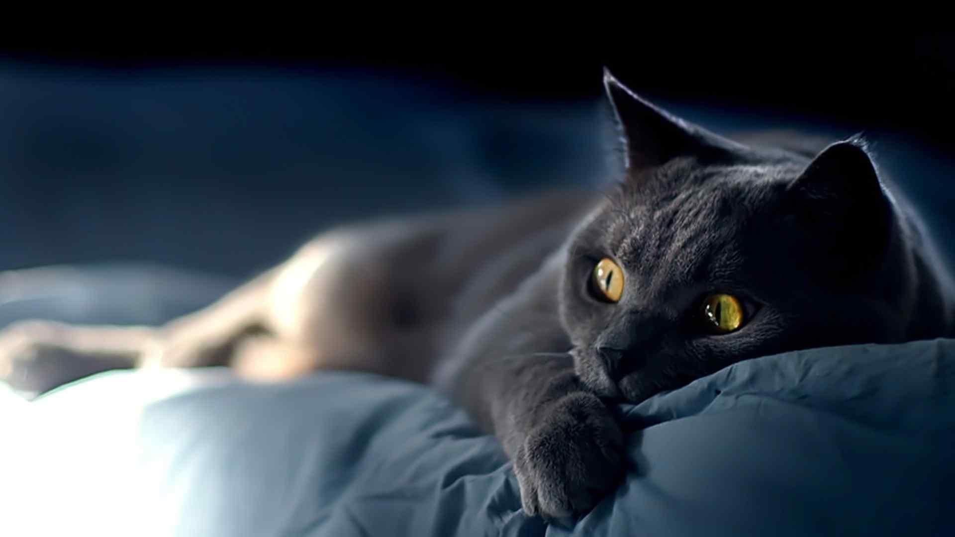 黑色猫咪躺着卖萌桌面壁纸