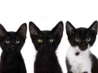 黑猫大耳朵小猫图片桌面壁纸