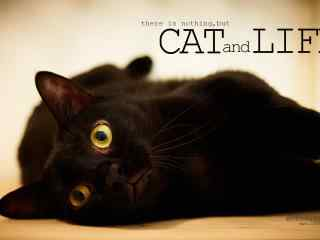 黑猫卖萌可爱图片桌面壁纸