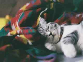 可爱猫咪睡觉图片
