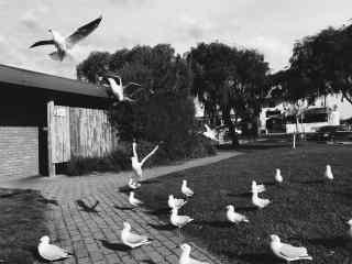 鸟儿展翅飞翔唯美