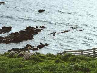 唯美海边海鸟一家