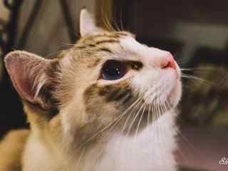 可爱猫咪唯美侧脸