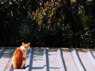 阳光下可爱的猫咪