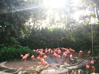 阳光下的粉色火烈鸟群唯美图片桌面壁纸