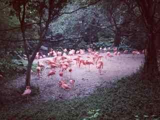 火烈鸟树林里栖息图片唯美桌面壁纸