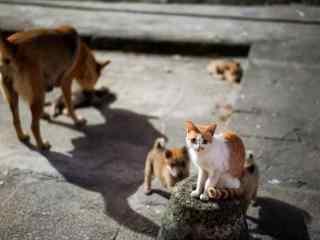 可爱小猫和小狗图
