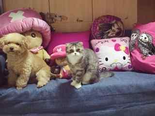 可爱猫咪与小狗排