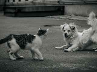 小猫小狗街边斗图