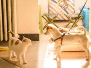 小猫小狗午后阳光