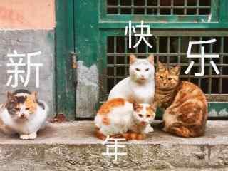 可爱的猫咪新年快