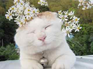 萌萌噠的小貓咪頭戴小花可愛圖片桌面壁紙