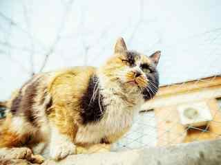 霸气外露的猫咪图