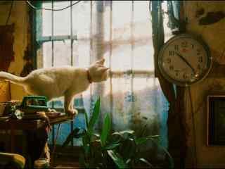 小白猫看时间可爱
