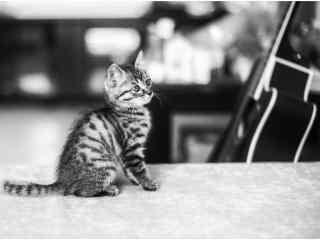 小奶猫卖萌图片高