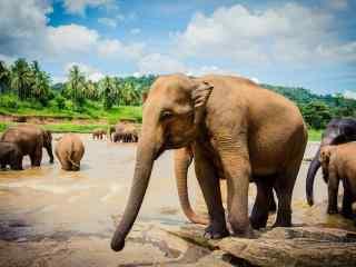 热带雨林里的大象