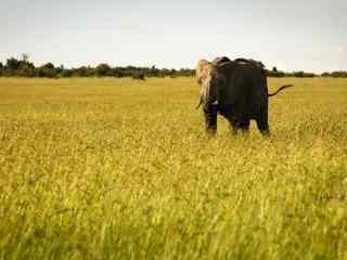 非洲大草原上的大