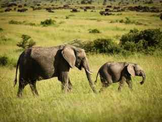 两头大象可爱图片